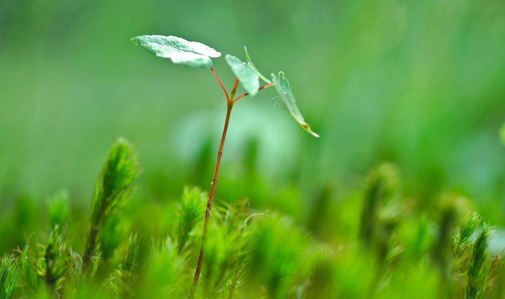 BWW-Energie-Klimanutral-Projekte